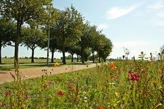 Blumen am Sommer Lizenzfreie Stockbilder
