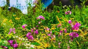 Blumen, St. Etienne, die Loire, Frankreich Stockfoto