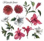 Blumen stellten von den Aquarelldahlien, von den Lilien, von den Stechapfelblumen und von den Blättern ein Lizenzfreie Stockfotografie
