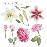 Blumen stellten von Hand gezeichneten Aquarelllilien, -rosen und -blättern ein Stockfoto