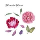 Blumen stellten von Hand gezeichneten Aquarellpfingstrosen, Rosen ein Lizenzfreie Stockbilder