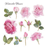 Blumen stellten von Hand gezeichneten Aquarellrosen und -blättern ein