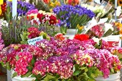 Blumen-Strömungsabriß Lizenzfreies Stockfoto