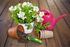 Blumen-Topf mit roten Blumen und Gartenarbeitgeräten Stockbilder