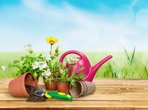 Blumen-Topf mit roten Blumen und Gartenarbeitgeräten Stockfotos
