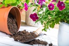 Blumen-Topf mit roten Blumen und Gartenarbeitgeräten Lizenzfreies Stockfoto