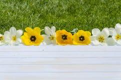 Blumen, Tulpen auf einem hellen hölzernen und Grashintergrund Romantisches Bild Lizenzfreies Stockfoto