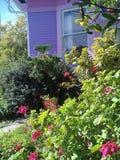 Blumen u. Büsche zieren blaues u. purpurrotes Haus Lizenzfreie Stockfotografie