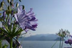 Blumen u. Berge lizenzfreie stockfotos