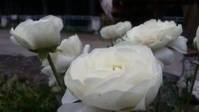 Blumen u. Blumen u. Blumen Stockfotografie