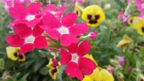 Blumen u. Blumen u. Blumen Lizenzfreie Stockfotografie