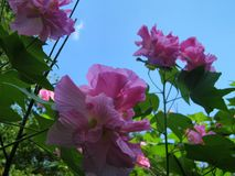 Blumen u. Himmel stockbild