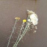 Blumen u. luftgetrockneter Ziegelstein Stockbilder