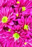 Blumen u. x28; Nahes Up& x29; Stockfotos