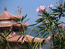 Blumen u. Pagode stockbild