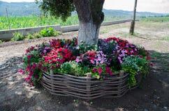 Blumen um den Baum Lizenzfreie Stockbilder