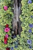 Blumen umgaben ein Stück altes Holz Stockbilder