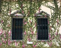 Blumen umgeben das Fenster Stockfotos