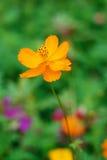 Blumen und Anlagen Lizenzfreie Stockfotos