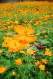 Blumen und Anlagen Lizenzfreies Stockfoto