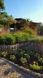 Blumen und Anlagen Lizenzfreies Stockbild