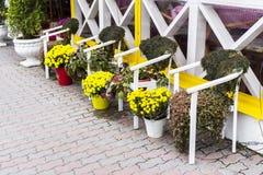 Blumen und Anlagen in den Blumentöpfen und in den Wannen im Entwurf lizenzfreie stockfotografie