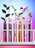 Blumen und Anlagen in den Reagenzgläsern Stockbild