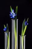 Blumen und Anlagen in den Reagenzgläsern Stockbilder