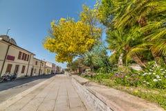 Blumen und Anlagen in Monteleone Roccadoria Lizenzfreies Stockbild