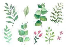Blumen und Anlagen stellten Watercolourvektorblätter und -niederlassungen ein lizenzfreie abbildung