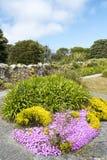Blumen und Anlagenscilly-Inseln Lizenzfreie Stockfotos