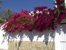 Blumen und Architektur in Nerja Spanien Stockfotografie