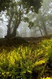 Blumen und Bäume in einem Wald Lizenzfreies Stockfoto