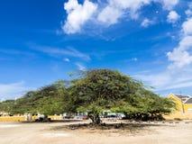 Blumen und Bäume um Scharloo Lizenzfreie Stockfotografie