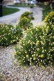 Blumen und Büsche lizenzfreies stockfoto