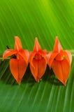 Blumen und Bananenblätter Stockbild