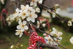 Blumen und Band des Gedächtnisses Stockfotos