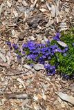 Blumen und Barke Lizenzfreies Stockbild