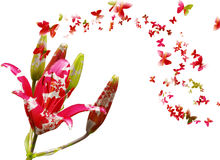 Blumen und Basisrecheneinheiten Stockfotos