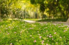 Blumen und Baumlandschaft Stockbild