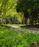 Blumen und Baumlandschaft Lizenzfreies Stockfoto