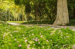 Blumen und Baumlandschaft Stockfotografie