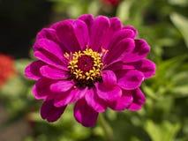 Blumen und Beeren im Garten stockfotografie