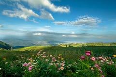 Blumen und Berg Stockfoto