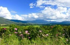 Blumen und Berg Lizenzfreie Stockbilder