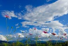 Blumen und Berg Stockbild