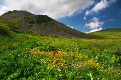 Blumen und Berge Stockfotografie
