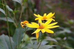 Blumen und Biene Stockfotografie