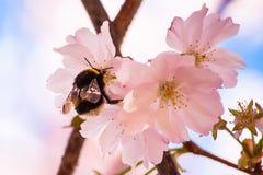 Blumen und Biene Stockbild