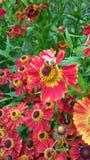 Blumen und Biene Lizenzfreie Stockfotografie